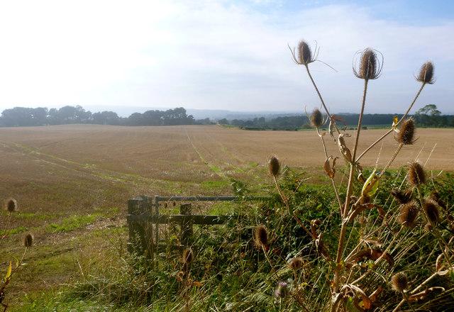 Stubble field at Carkin Moor