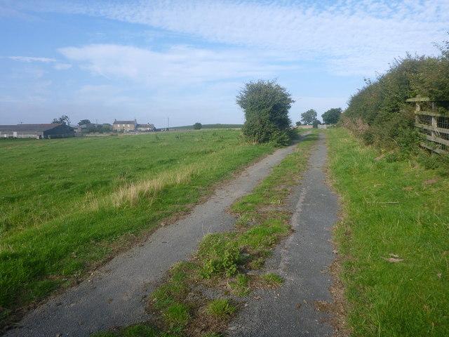 Warrener Lane, a road returning to nature