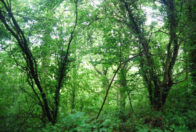 Woodland by Worth Way