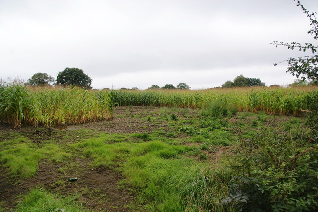 Maize at Monkspath