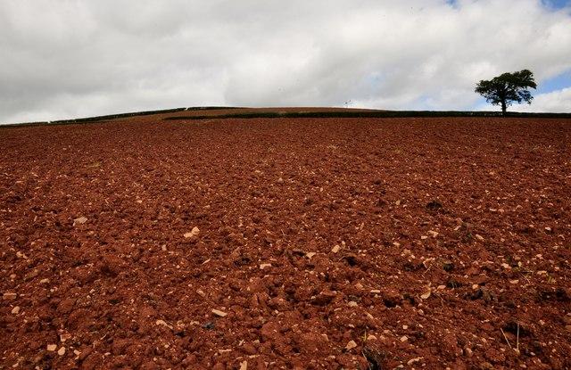 Mid Devon : Ploughed Field
