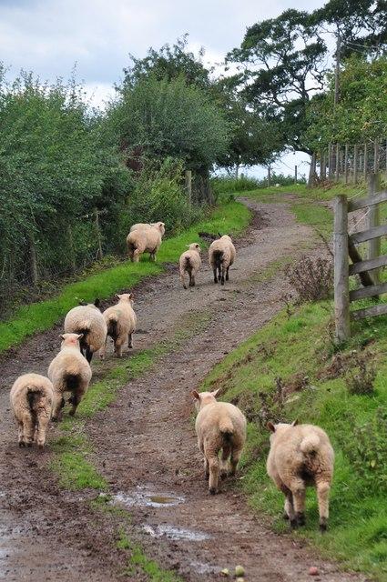 Mid Devon : Cadeleigh Court Track