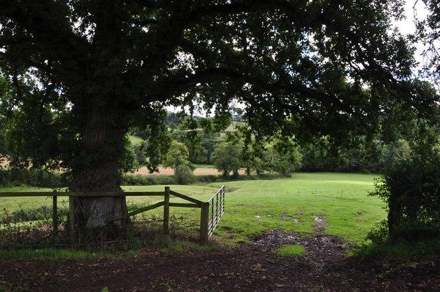 Mid Devon : Grassy Field
