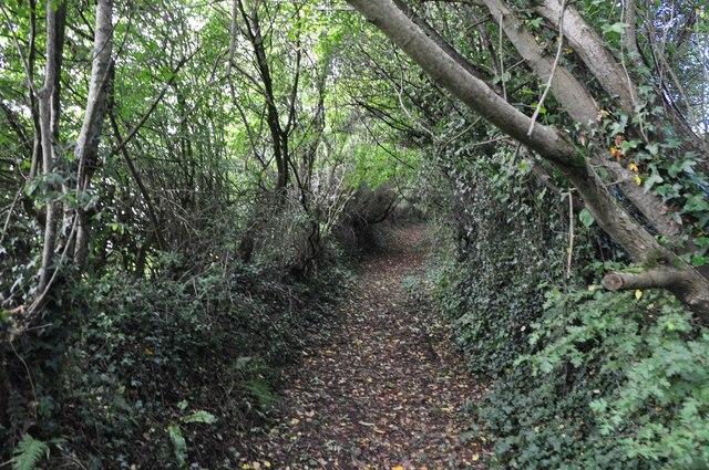 Mid Devon : Back Lane