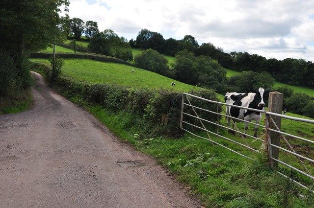 Mid Devon : Visitor Hill