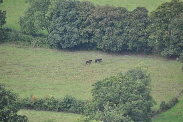 Mid Devon : Field & Horses