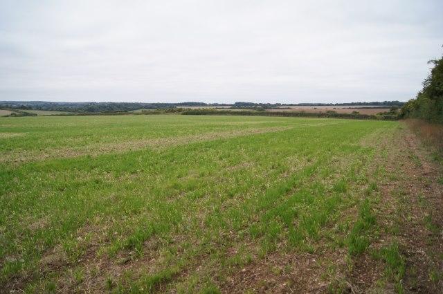 Fields south of the Harrow Way
