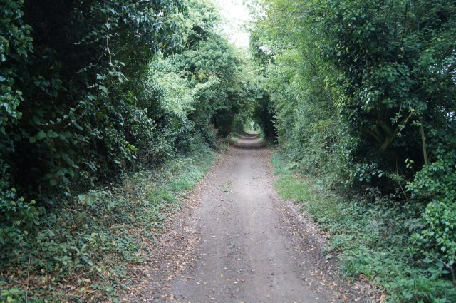 Harrow Way - north of Overton