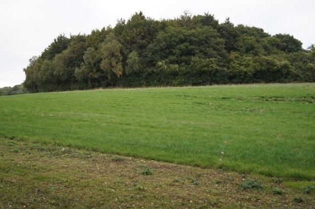 Kingsdown Wood