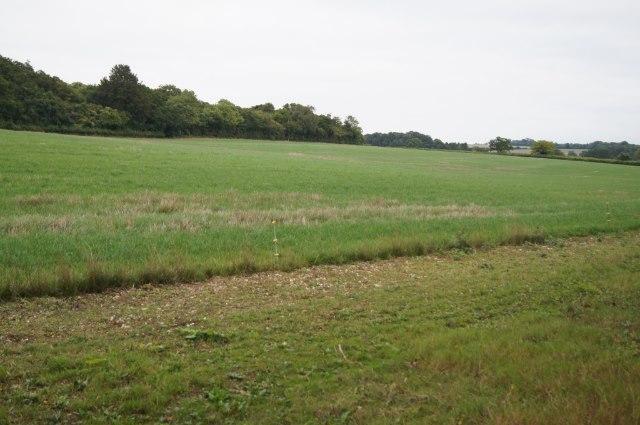 Pasture south of Kingsdown Wood