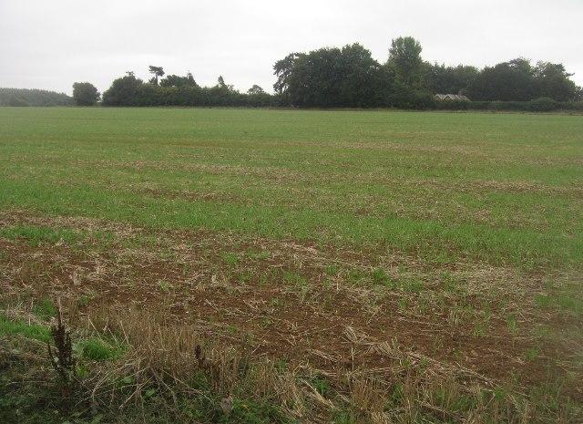 Winter wheat - Saltash Field