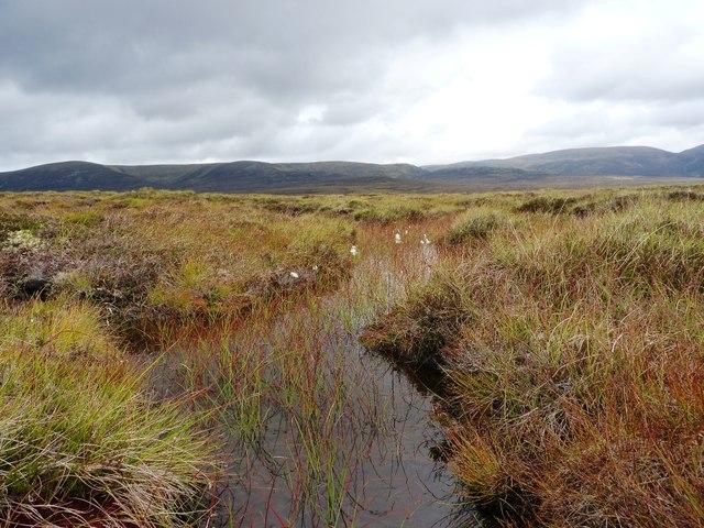 A small bog pool east of Sròn na Ban-righ