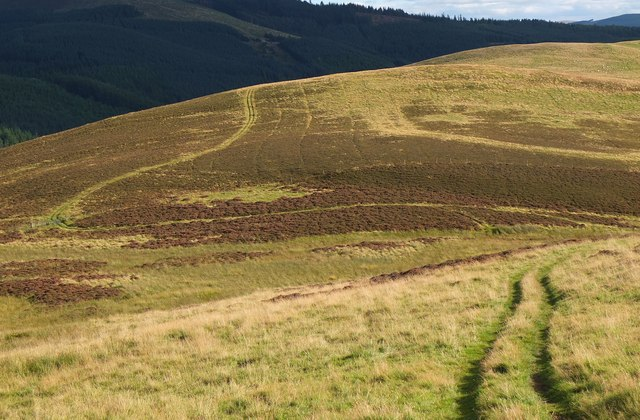 Track on Collie Law