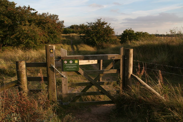 Dune scrubland in Theddlethorpe Dunes National Nature Reserve