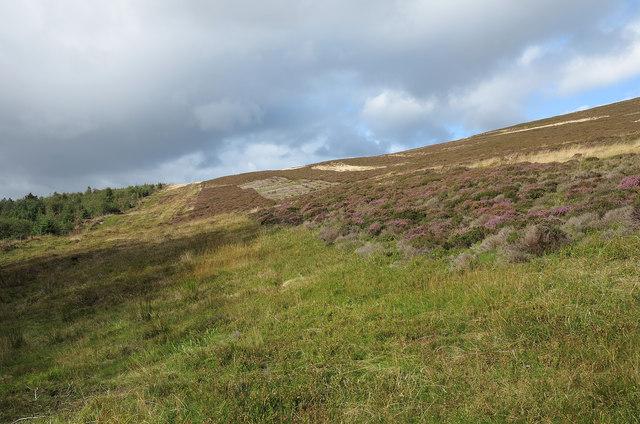 Moorland slopes west of Foel Cwm-Sian Llwyd