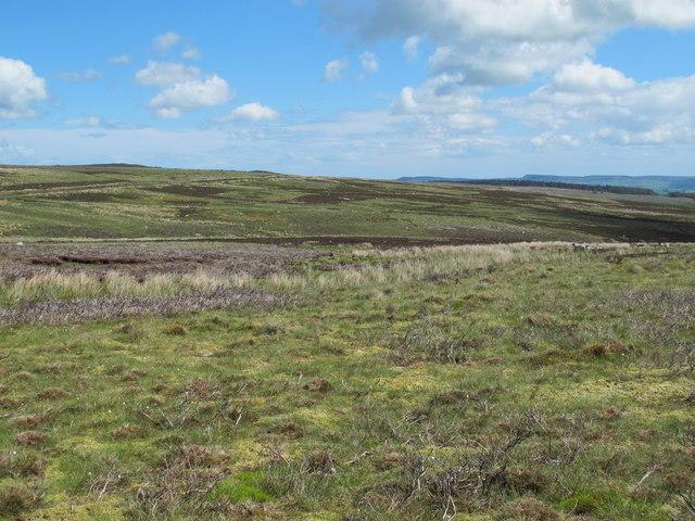 Moorland around Longtae Burn