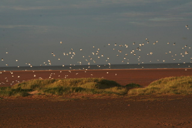 Sea gulls over the last defence against the sea