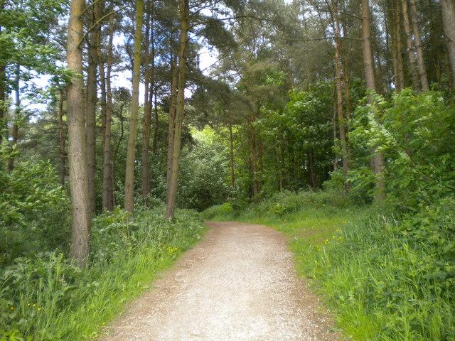 Into the woods, near Lower Blackshaw Farm