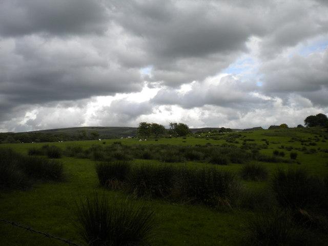 Pasture near Troutsdale Farm