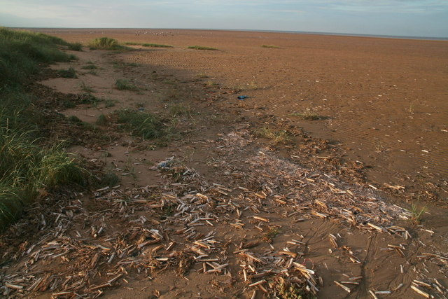Razor shell debris near Crook Bank