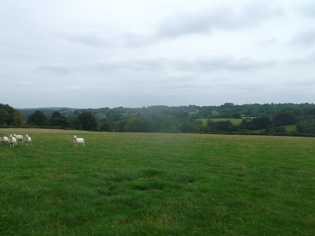 Sheep Pasture near Birchetts Green Lane