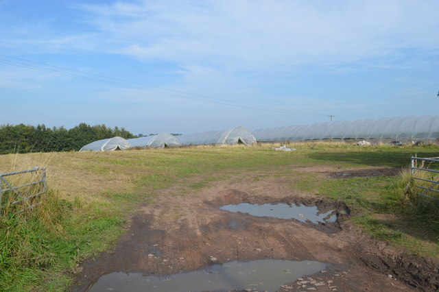 Polytunnels near the Swan at Whiston
