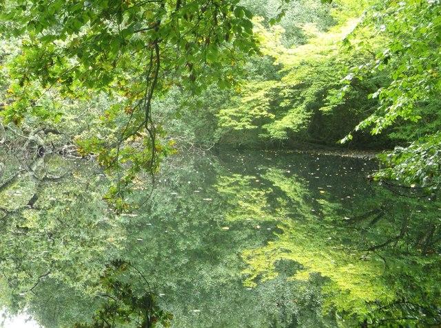 Pond beside Ward's Lane