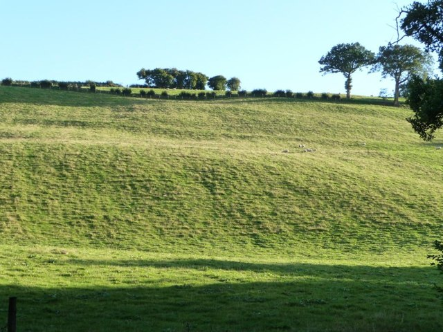 Hillside sheep, as the sun sets
