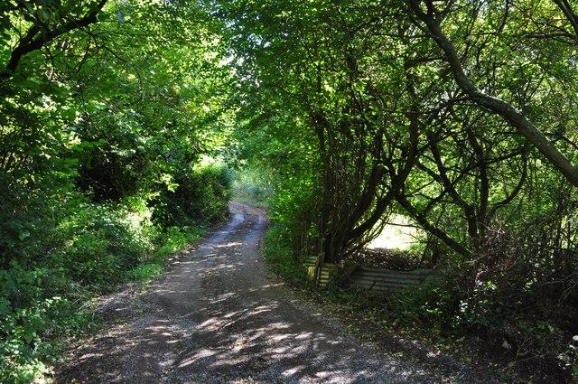 Mid Devon : Track to Coombewillis