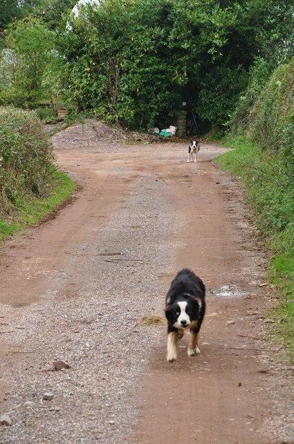 Mid Devon : Track to Well Farm