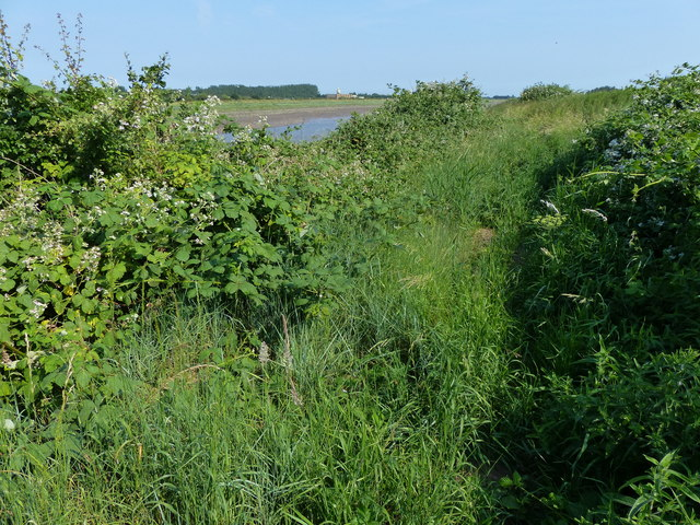 Overgrown section of the Macmillan Way footpath