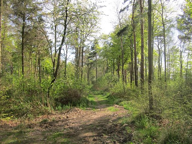 Path, Walk Plantation