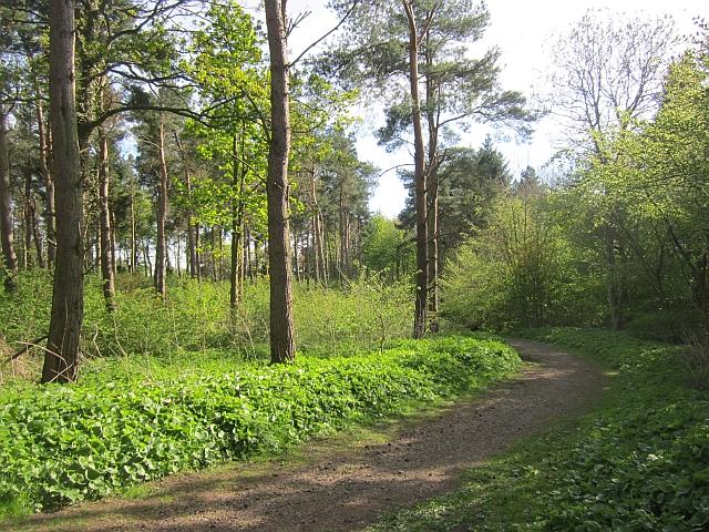 Track, Walk Plantation