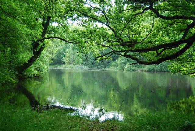 Lake in Broke's Wood