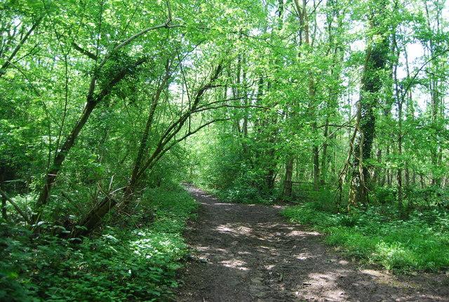 Footpath by Broke's Wood