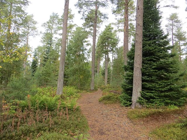 Path, Heatherhall Wood