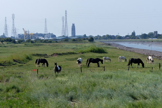 Horses along The Haven