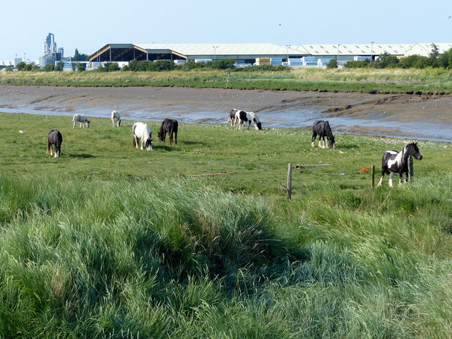Horses grazing the bank of The Haven