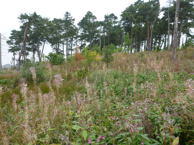 Gatherley Moor Quarry Plantation