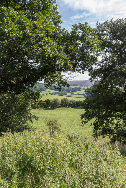Trees on The Mount, Hundred House, Powys
