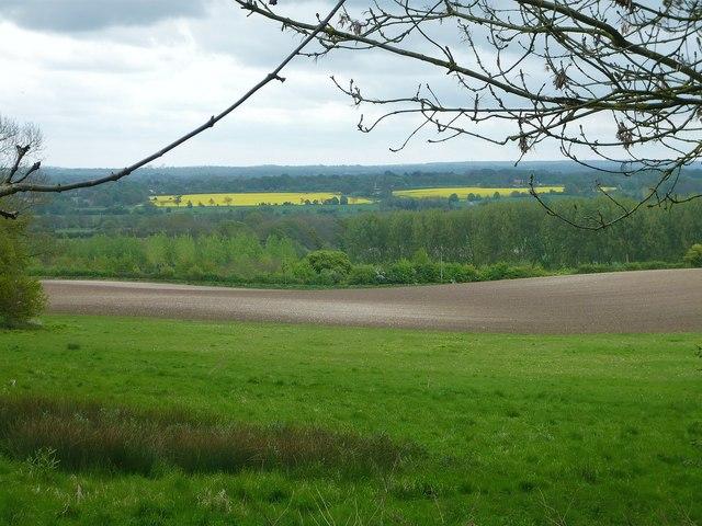 Mellow yellow Playhatch/ Binfield Heath
