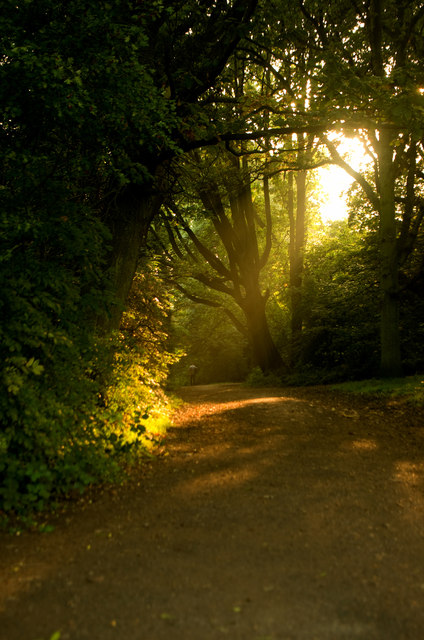 Path in evening sun, Hampstead Heath