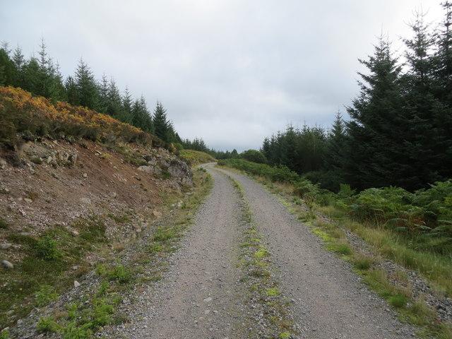 Forest road in Gleann Chomraidh
