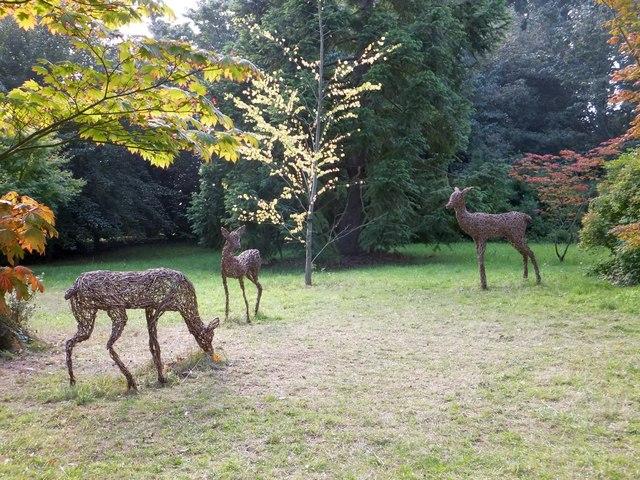 Statues of deer in the shelter belt of Killerton Garden