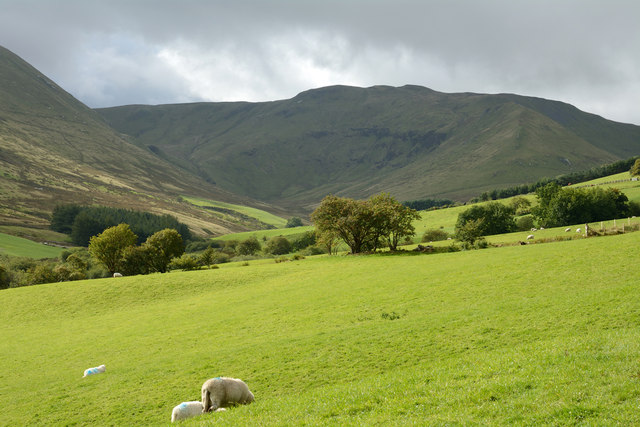 Field with sheep in Cwm Croes