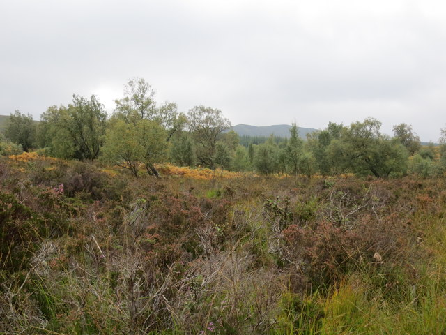Natural woodland on the lower slopes of Meall Caol