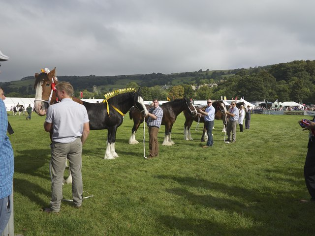 Pateley Bridge Agricultural Show ring