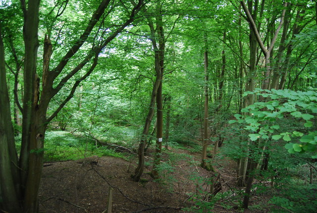 Woodland by Forest Way
