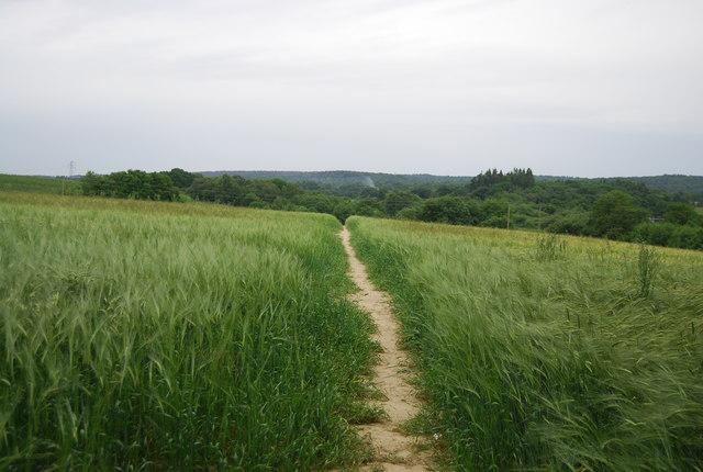 Footpath in Barley