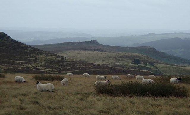 Moorland sheep and view south
